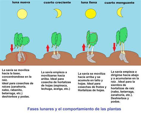 Calendario De Lunas 2015 Search Results For Fase Lunar 2015 Calendar 2015