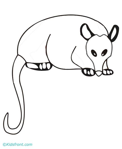 printable possum mask free coloring pages of a possum