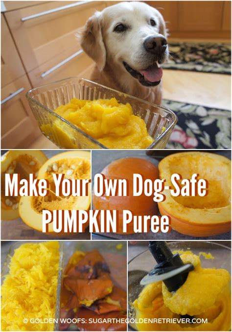 pumpkin puree for dogs make your own safe pumpkin puree golden woofs