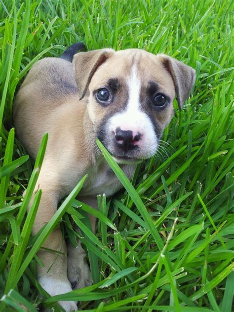 my new puppy winnie black mouth cur but with a