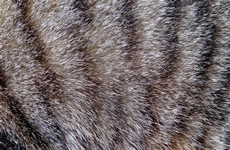 Cat Hair On by Free Stock Photos Rgbstock Free Stock Images