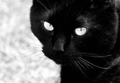 black cat andmoreagain