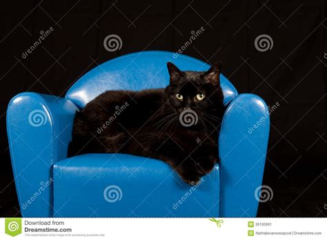 Cat Sitting In Chair by Black Cat Sitting In A Blue Mini Chair Stock Image Image