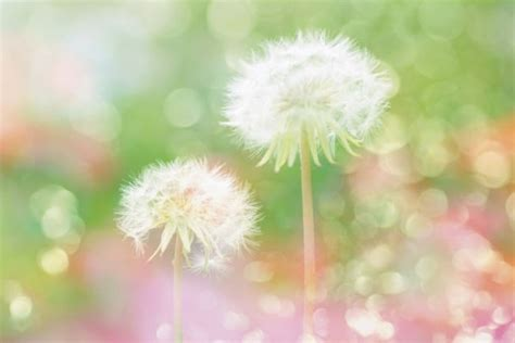 Bunny Nature Snack Fresh Green Snack With Dandelion 450g halo dandelion hd picture free stock photos in image format jpg size 5009x3352 format for