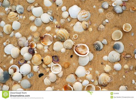 shells in the sand stock photo image of paradise aquatic 534668