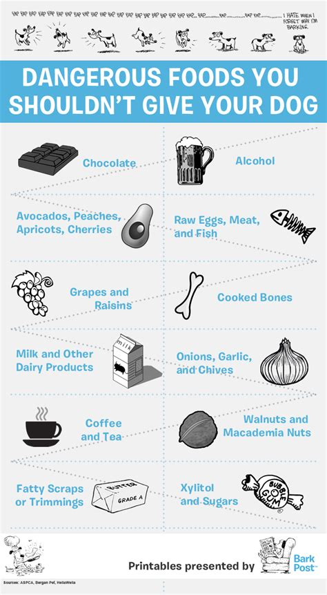 dangerous foods for dogs printable infographic everyday foods that your should avoid barkpost