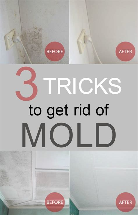 how to get rid of mold in house 3 tricks to get rid of mold 101cleaningtips net