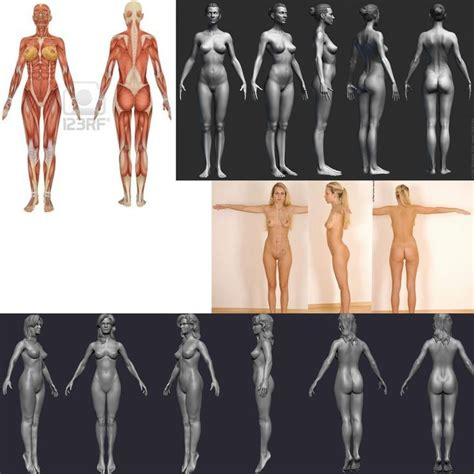 zbrush tutorial human body 573a59fbef8461dea48c90a83b76f512 jpg 1024 215 1024 zbrush