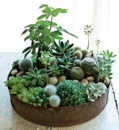 Indoor Cactus Garden Ideas 70 Indoor And Outdoor Succulent Garden Ideas Shelterness
