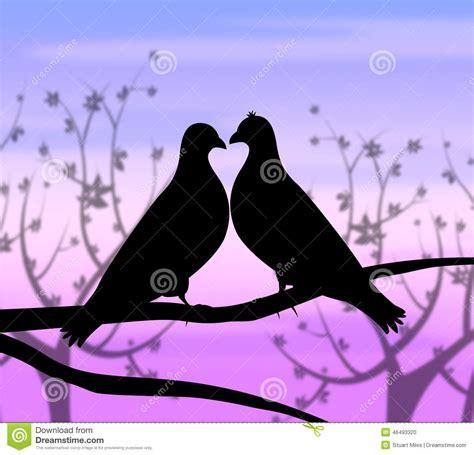 imagenes que representen good morning los p 225 jaros del amor representan la pasi 243 n y el coraz 243 n de