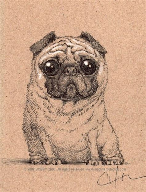 big pug big eyed pug drawing artsy