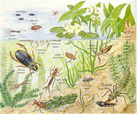 Types Of Garden Worms - 167 best images about pond life on pinterest singapore nymphs and pond life
