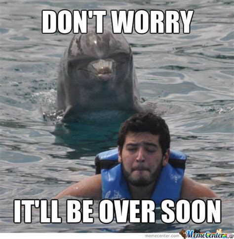 4 Picture Meme - dolphin meme pictures to pin on pinterest thepinsta