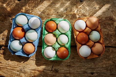 Animal Egg eggs and animal welfare oliver features