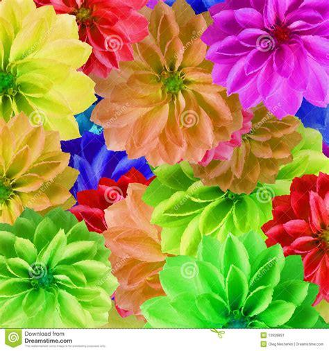 imagenes flores grandes flores grandes coloridas imagen de archivo imagen 13928851