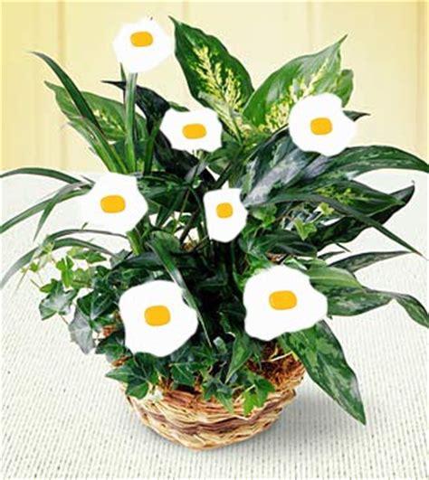 visual pun egg plant multimedia design visual puns