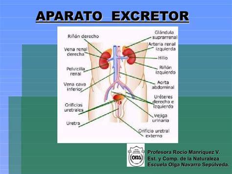 sistema excretor aparato excretor nb3