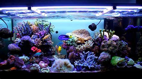 quanto costa l ingresso all acquario di genova acquario marino 350 litri