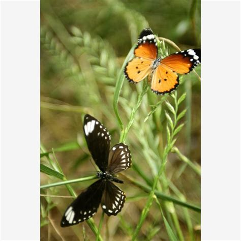 25 b 228 sta birds and the bees id 233 erna p 229 pinterest