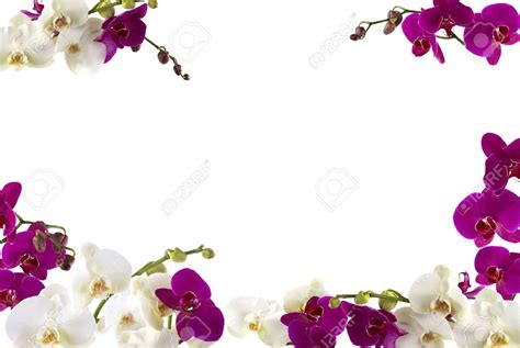 orchideen gestell orchid border clip 60