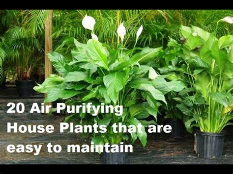 Best Low Light Houseplants by Top 20 Indoor House Plants For Air Purification Youtube