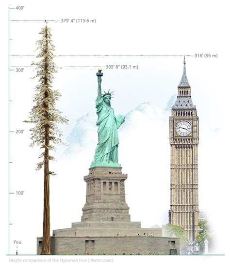 How Tall Is The World's Tallest Tree? IFLScience