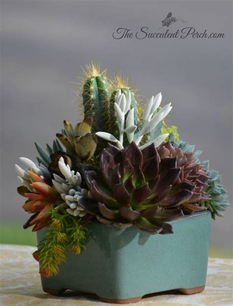 indoor plant arrangements 558 best succulent container arrangements images on