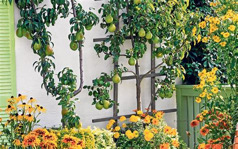 plant fruit trees to make your garden complete fruit trees gardens and vegetable garden