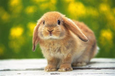 coniglio da appartamento animali domestici coniglio archivi ferplast