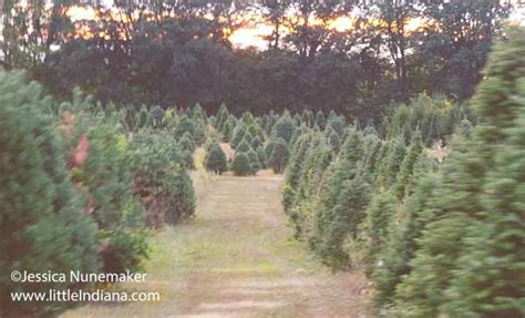 images piney acres in fortville littleindiana com