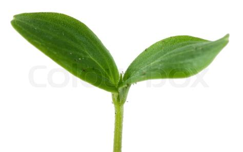 small plant small plant isolated over white background stock photo