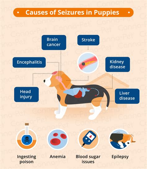 types of seizures in dogs seizures in puppies causes symptoms canna pet