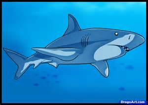 how to color how to draw a shark step by step fish animals free