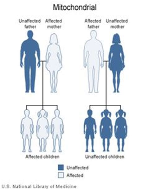 pattern dystrophy wikipedia 1000 images about 12biology on pinterest dna biology