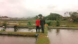 Bibit Lele Sangkuriang Sawangan Depok peternakan lele di kota depok jawa barat generasi emas