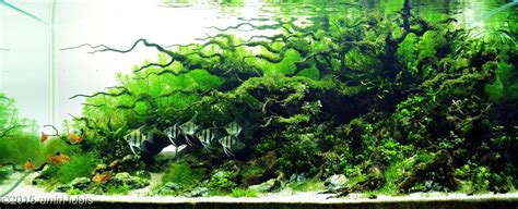 aquascaping competition 2015 aga aquascaping contest 150