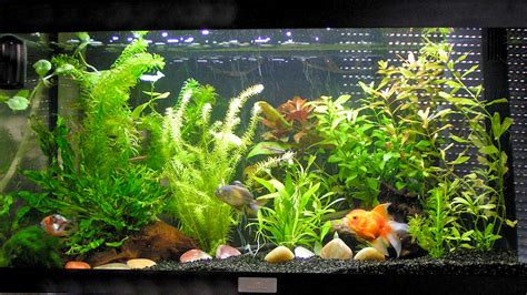 Comment Nettoyer Les Decors D Aquarium by Le Site Du Poisson Quel Sol Pour Les Poissons Rouges