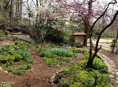 quarry shade garden at bon air park master gardeners of northern virginia
