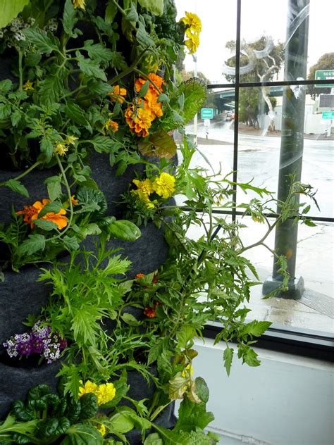 Plants On Walls Vertical Garden Systems Aquaponic Vertical Vegetable Gardening Systems