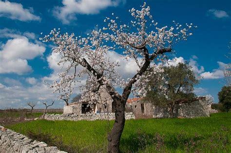 fiori bari puglia in fiore i nostri lettori fotografano la primavera