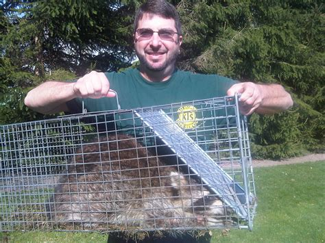 Garden State Wildlife New Jersey Raccoon Trapping And Removal