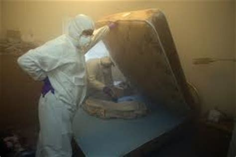 pest control canberra bed bug fumigation