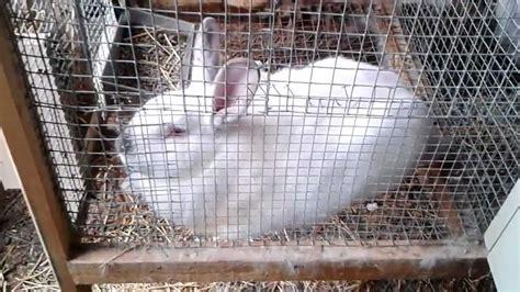 bebederos para conejeras intalacion casera para conejos avanzada