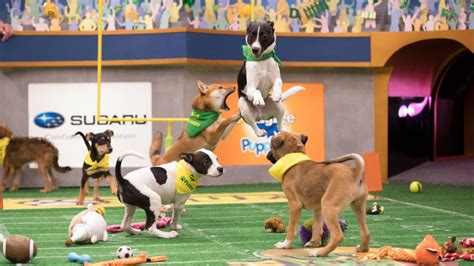 when does the puppy bowl start puppy bowl xiv 5 facts tv insider