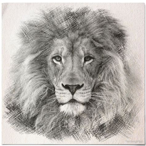 lion tattoo sketch sketch by fantasytripp concept