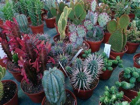 quando innaffiare il giardino innaffiare piante grasse piante grasse come innaffiare