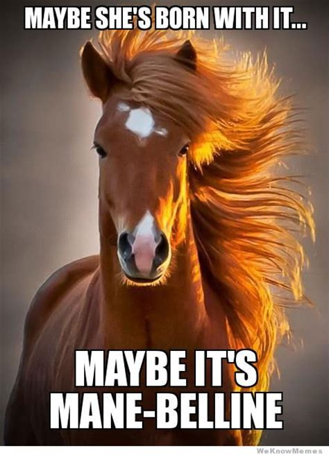 Meme Horse - photogenic horse meme