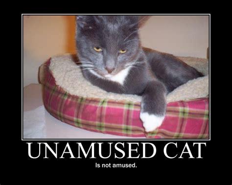 Unamused Cat Meme - unamused cat by zagnagma on deviantart
