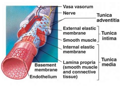 Vein And Artery Detox by Foods That Cleanse The Arteries Naturally