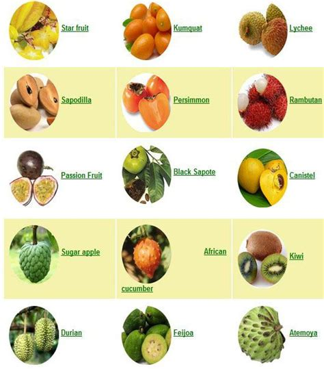 fruit trees names list of all the fruits in the world fruit fruits
